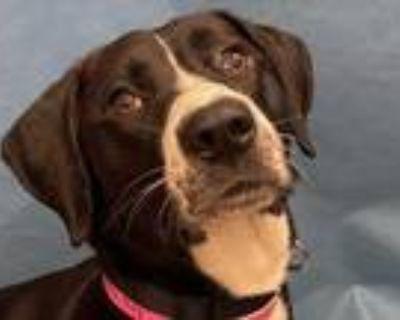 Adopt Zoe a Black Labrador Retriever / Mixed dog in Golden Valley, MN (32030093)
