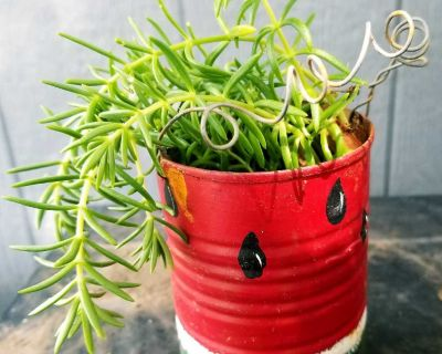 Adorable tin can planter with plant.