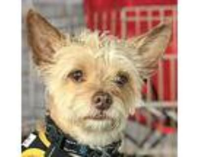 Quincy, Terrier (unknown Type, Small) For Adoption In Los Angeles, California