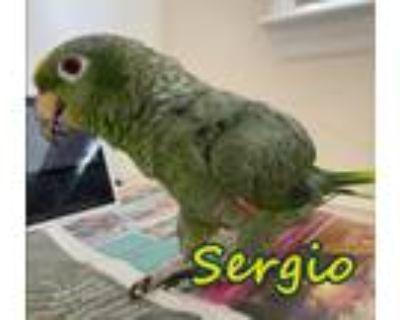Adopt Sergio a Amazon