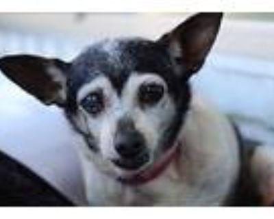 Dottie, Terrier (unknown Type, Small) For Adoption In Creston, California