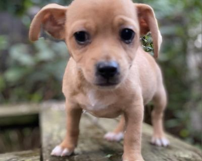 Beck 11146 - Mixed Breed (Small) - Puppy Male