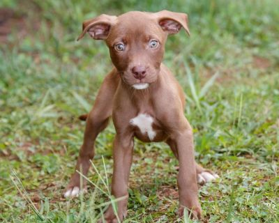 Jolene 11028 - Mixed Breed (Medium) - Puppy Female