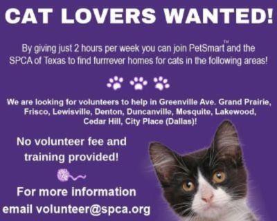 Volunteers Needed at Denton Petsmart