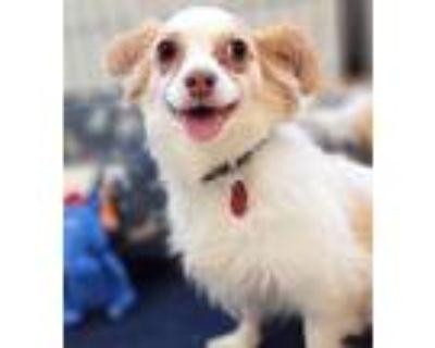 Adopt Mobius a Spaniel, Terrier