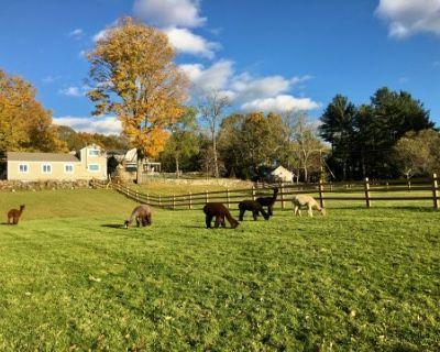 Alpaca farm with sprawling views, Sherborn, MA