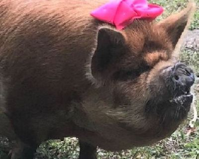 Piglets and Pigs For Sale
