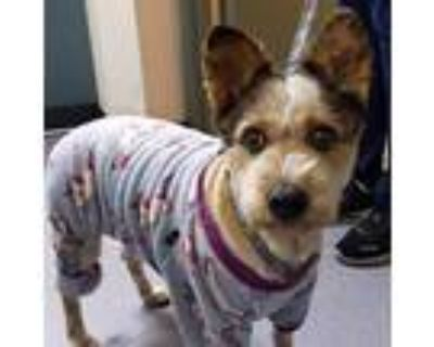 Lucky, Terrier (unknown Type, Medium) For Adoption In Oakland, California