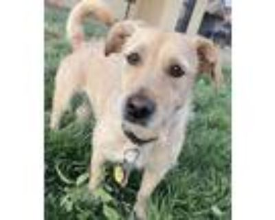 Adopt Wendy- courtesy post a Tan/Yellow/Fawn Terrier (Unknown Type
