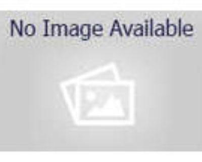 Adopt BLAKE a Black & White or Tuxedo American Shorthair / Mixed (short coat)