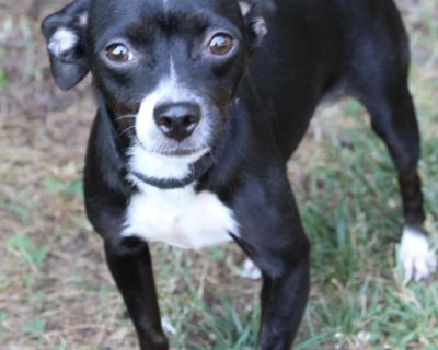 Nadine P 11339 - Mixed Breed (Small) - Adult Female