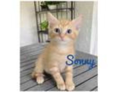 Adopt Sonny a Orange or Red (Mostly) Domestic Mediumhair / Mixed cat in Bossier
