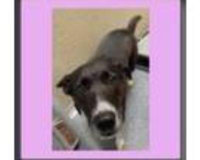 Adopt Tutti Frutti Ice Cream a Labrador Retriever / Mixed dog in Alexandria