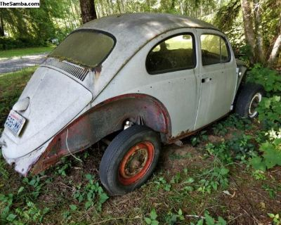 1961 VW Beetle Sedan