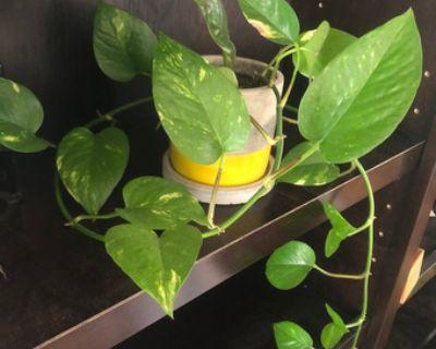 HOUSE PLANTS FOR SALE!