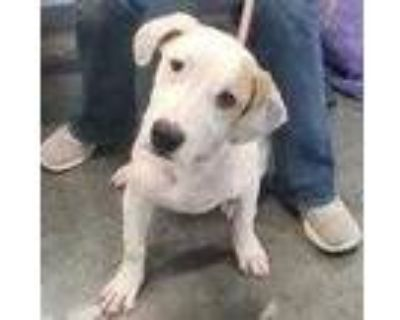 Adopt Nyla a White Hound (Unknown Type) / Mixed dog in West Chester