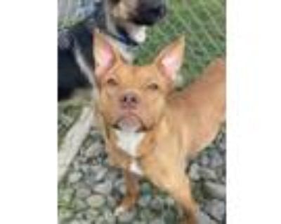 Adopt Grimme a Mixed Breed