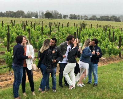 Napa Valley Wine Tours near San Francisco