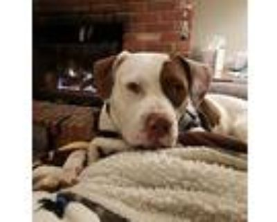 Fiona2, Pit Bull Terrier For Adoption In Highlands Ranch, Colorado