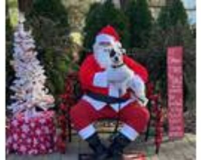 Adopt Patience a Terrier