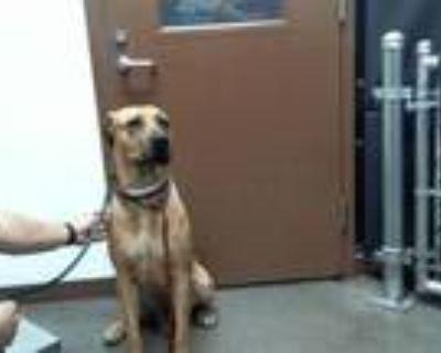 Adopt MINNY a Mastiff, Mixed Breed