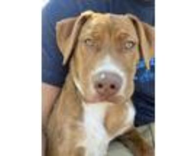 Adopt Rollie a Mixed Breed
