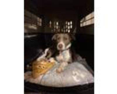 Adopt Coco a Mixed Breed