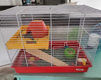 Syrian Hamster Comes with cage and all accessories needed