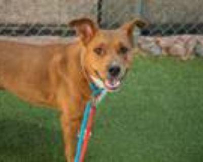 Adopt POSEY a Australian Cattle Dog / Blue Heeler, Mixed Breed