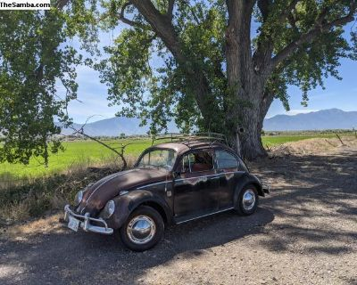 Awesome patina 1961 Volkswagen Bug