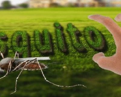 Are You Searching For One Of The Best Termite Control In Arlington