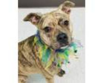 Adopt Hattie a Mixed Breed