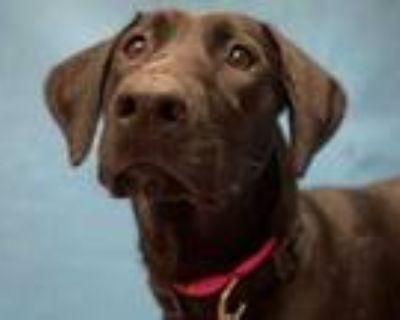 Adopt Naomi a Black Labrador Retriever / Mixed dog in Golden Valley