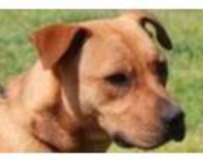 Adopt Kamper Low Fee!! a Boxer