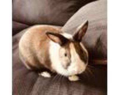 Adopt BunBun a Bunny Rabbit