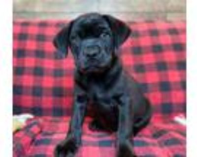 Adopt Scorpion a Mixed Breed