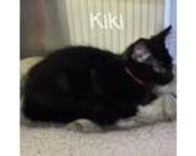 Adopt Kiki a All Black Domestic Longhair / Mixed cat in Madisonville