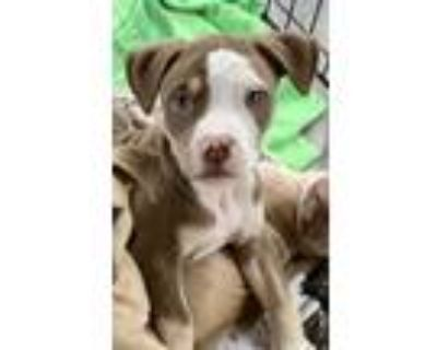 P.j., Terrier (unknown Type, Small) For Adoption In West Allis, Wisconsin