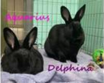 Adopt DELPHINA a Bunny Rabbit