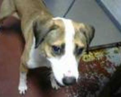 Adopt JOEY a Beagle, Mixed Breed