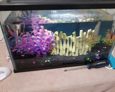 5 gallon tank with two fish