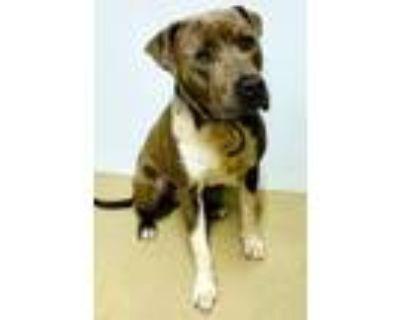 Adopt Gray a Retriever, Terrier