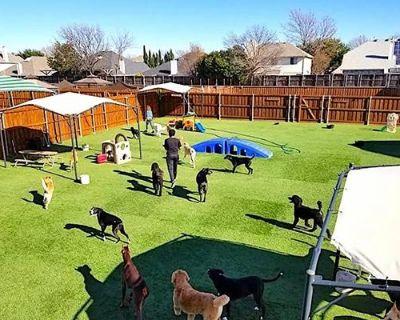Dog Care Center OKC, USA.