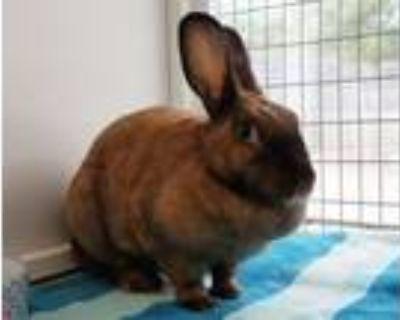 Adopt REESE a Bunny Rabbit