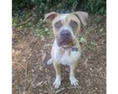 Wren, American Pit Bull Terrier For Adoption In Oakland, California