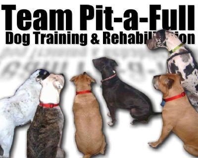 ALL BREED Dog Training & Rehabilitation