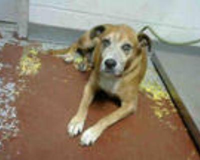 Adopt MORIARTY a Tan/Yellow/Fawn Labrador Retriever / Mixed dog in Atlanta