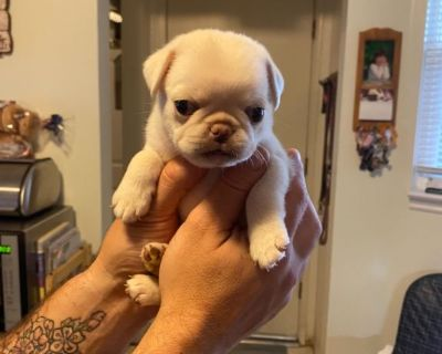 Puppy for sell