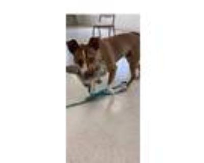 Adopt Spot a Terrier, Husky
