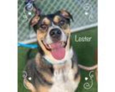 Adopt LESTER and SARA a Tricolor (Tan/Brown & Black & White) Hound (Unknown